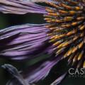 Casey J Photography, Macro, Flora, Fauna