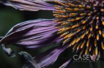 Macro // Flora and Fauna