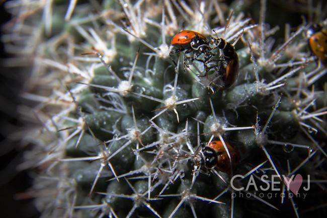 Casey J Photography, Macro, Flora, Fauna, Macro Flora and Fauna