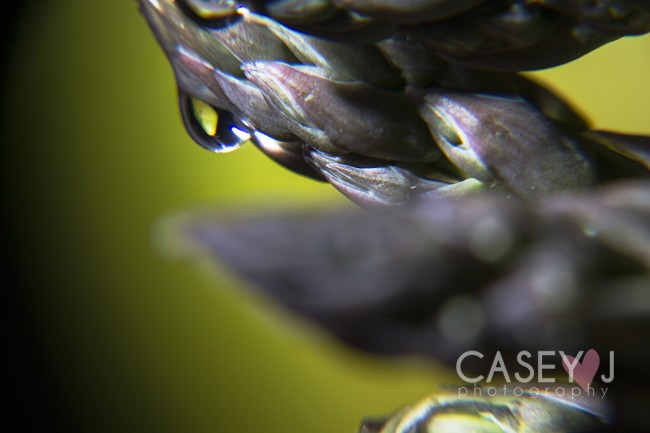 Casey J photography, water drop photography, macro photography