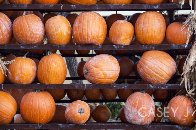 Salt Lake Fine Art, Salt Lake City Fine Art, Gardner Village, Salt Lake City Farmers Market, Fine Art Photography