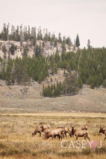 Yellowstone Fine Art, Yellowstone Landscapes, Yellowstone wildlife, Yellowstone geysers, Yellowstone Art Yellowstone, Yellowstone National Park, Yellowstone National Park Fine Art, Casey J Photography, Casey Doxey